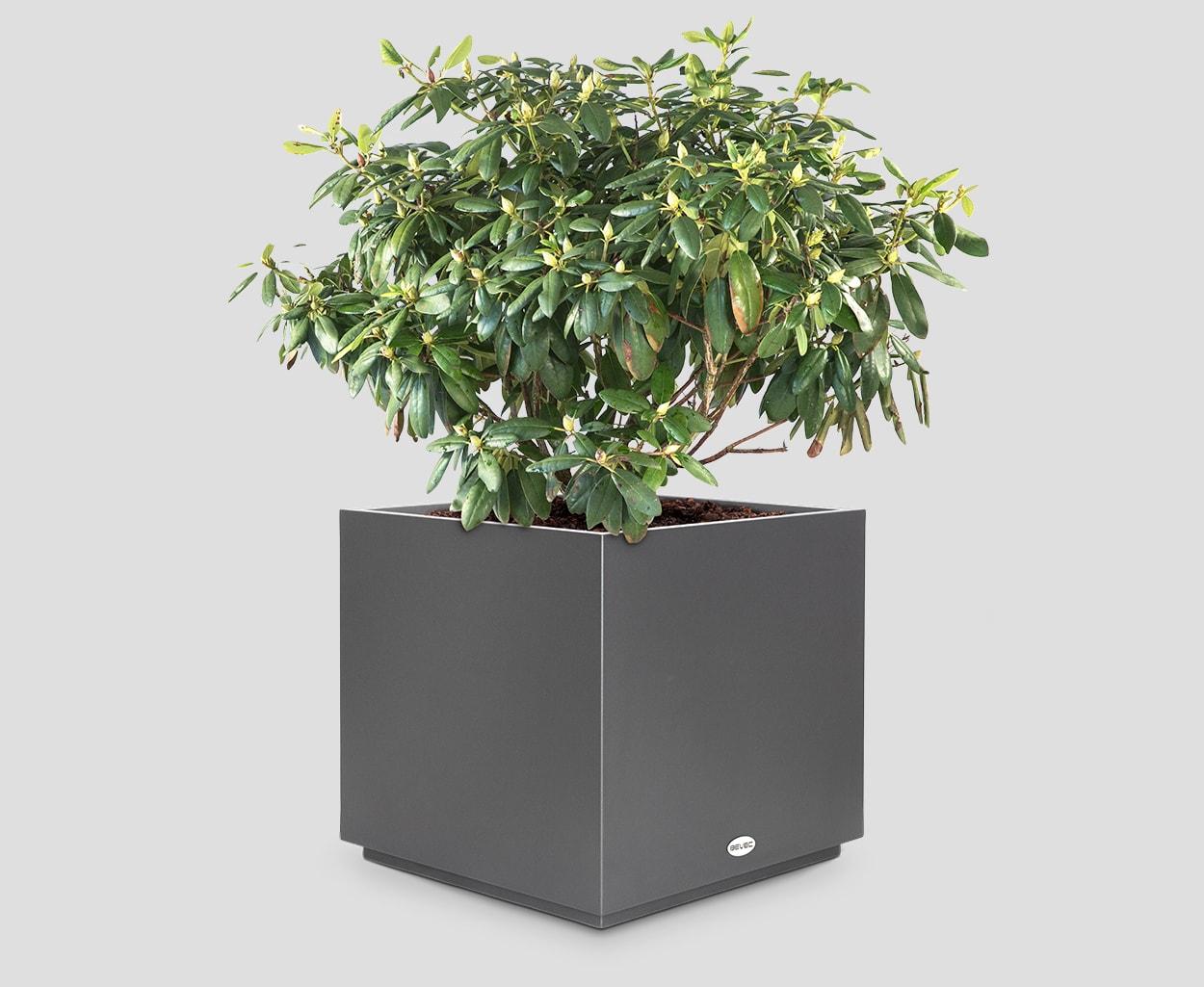 Korito za rože Cube